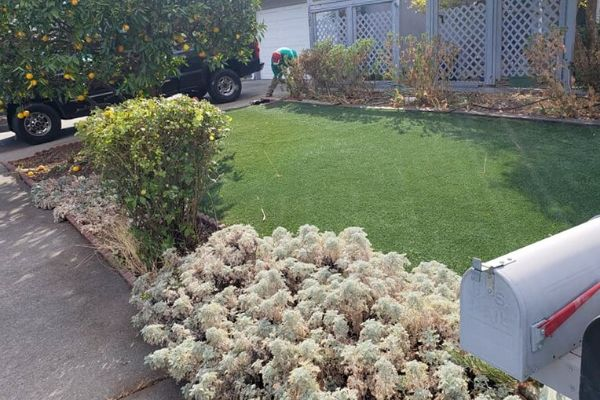 Sacramento front lawn after weekly treatment