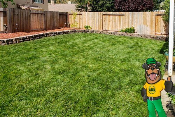 Green backyard after a treatment