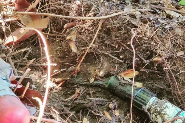 A broken irrigation line that needs repair