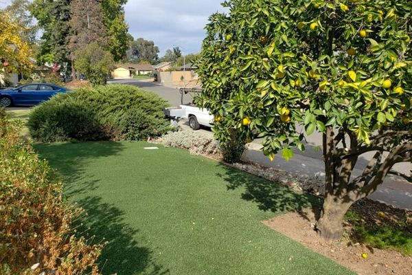 Green front lawn that is well aerated
