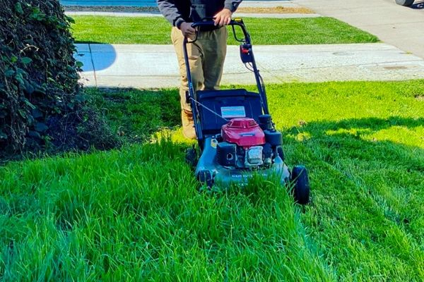 Long grass being mowed with a push lawn mower.