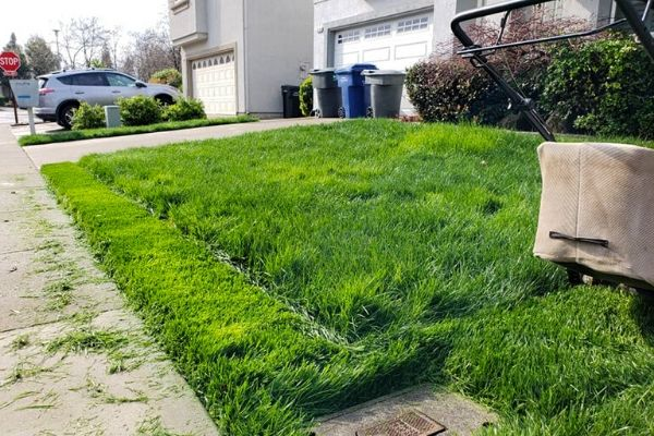 One stripe of cut grass done by a push mower