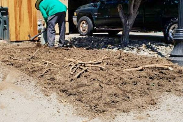 Root removal for sod installation