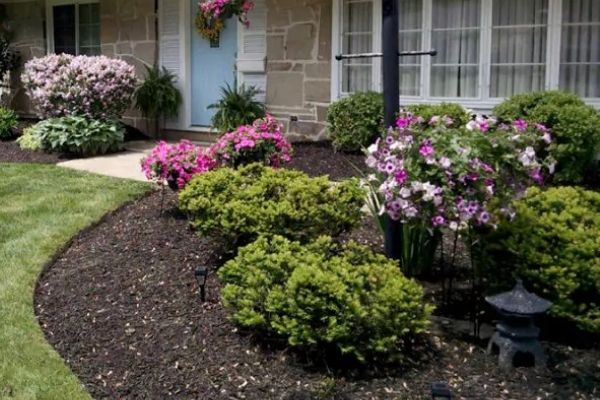 New mulch in a landscape bed with plants.
